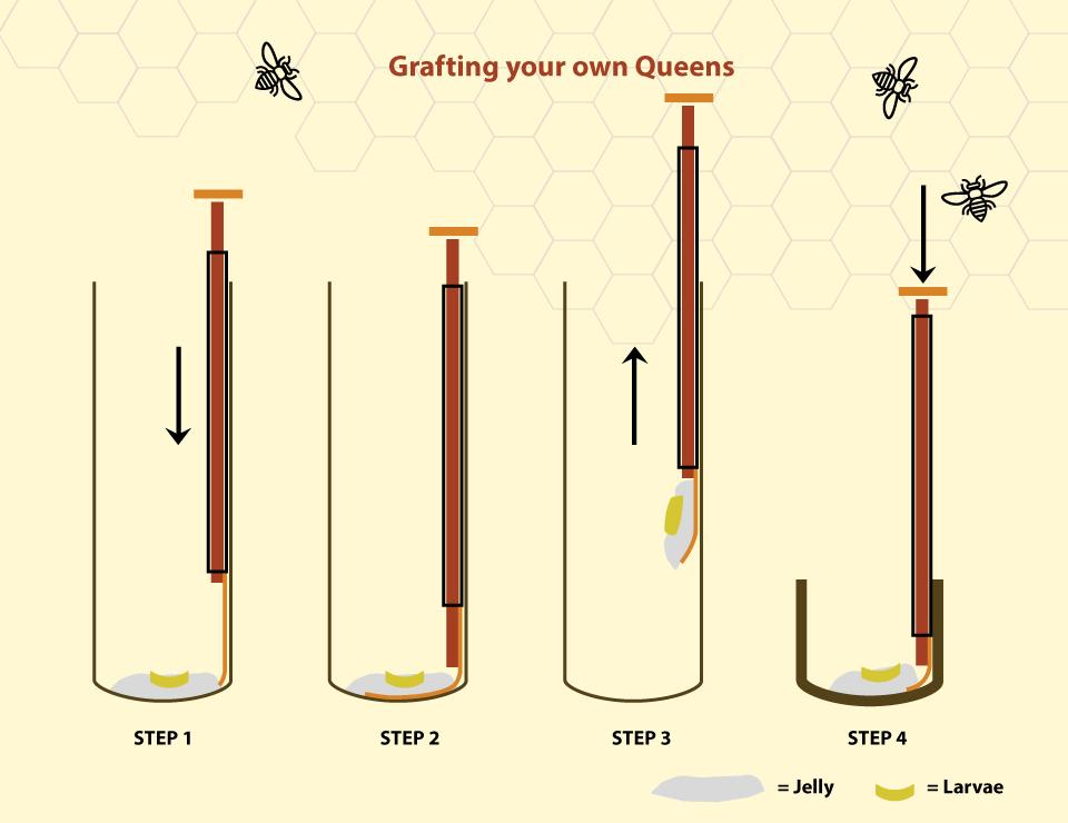 grafting-tool2