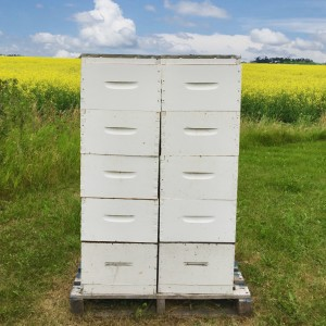 At peak canola season, strong hives can produce 20 pounds per day.
