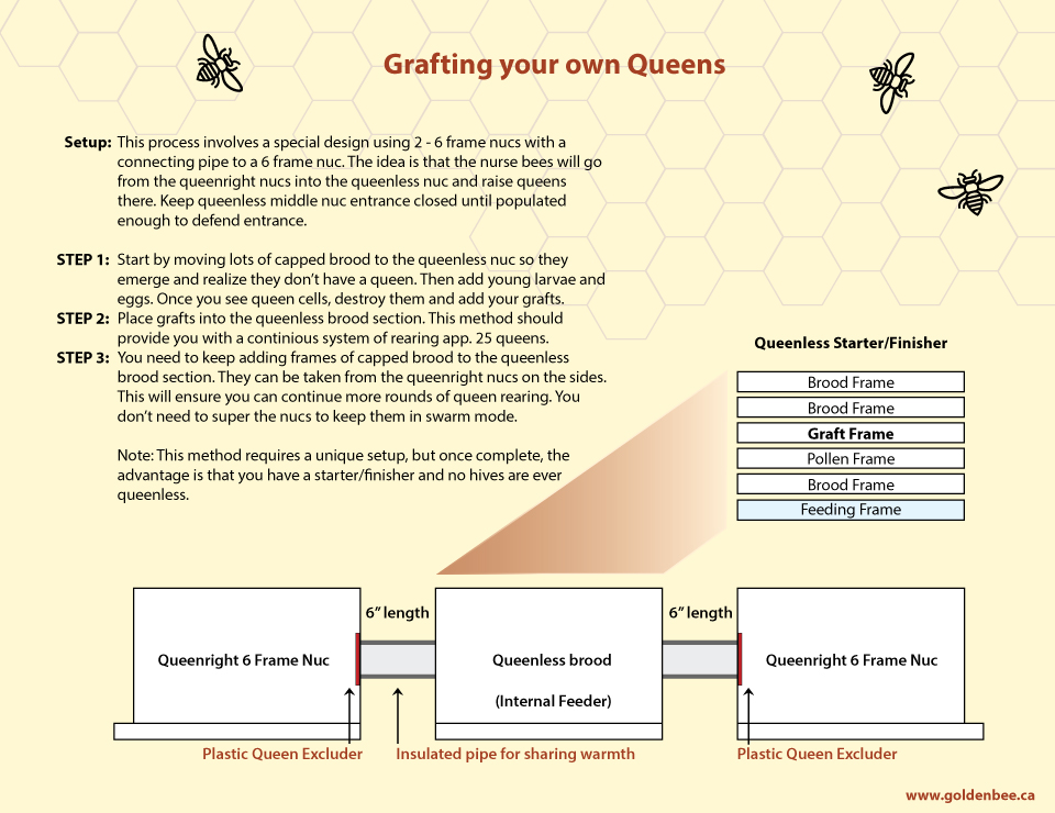 Fb C F E Ae D C F likewise Langstroth Hive Parts also Hive Beetle Lifecycle together with Honey Bees Lg further Queenrearingtimeline. on queen honey bee diagram