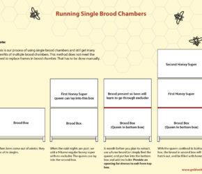 Single_Brood_Chamber