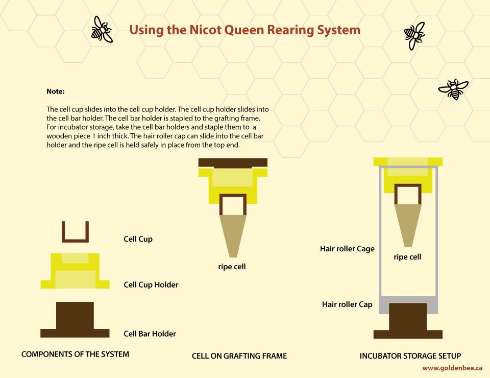 Nicot_Queen_Rearing-_Diagram