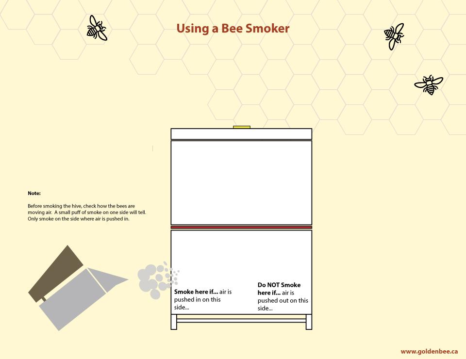 Using-a-Bee-Smoker